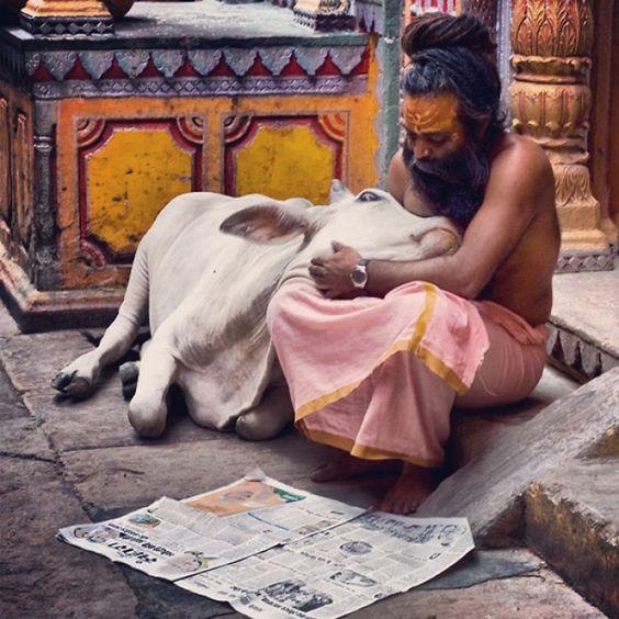 Hindu Gaay Mata Image HD