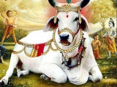 Hindu Gau Mata Photo Gaay